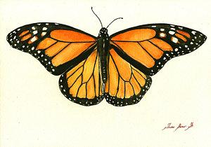 monarch-butterfly-juan-bosco